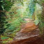 wesonbirt, woods, walk