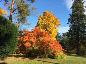 autumn, westonbirt
